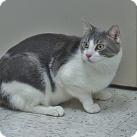 Adopt A Pet :: Paul - Chambersburg, PA