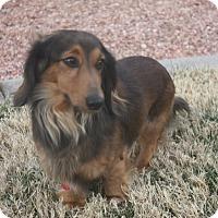 Adopt A Pet :: Sonny - Henderson, NV