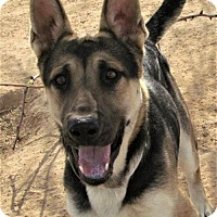 Adopt A Pet :: Max - San Tan Valley, AZ