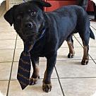 Adopt A Pet :: Lee