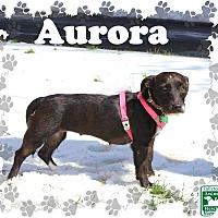 Adopt A Pet :: Auroa - Fallston, MD