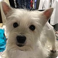Adopt A Pet :: Annabelle - Omaha, NE