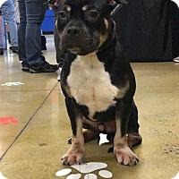 Adopt A Pet :: Pocket - Wenonah, NJ