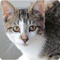 Adopt A Pet :: P Nut - Warren, MI