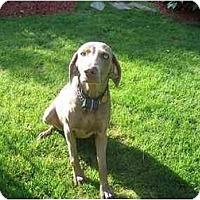 Adopt A Pet :: Macy - Attica, NY