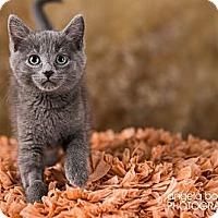 Adopt A Pet :: Rose - Eagan, MN