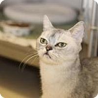 Adopt A Pet :: Satchemo - El Cajon, CA
