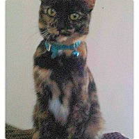 Adopt A Pet :: Bailee - Olmsted Falls, OH