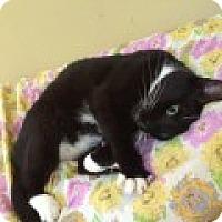 Adopt A Pet :: Reena - Harrisburg, NC