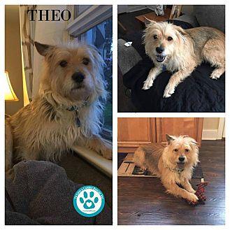 Terrier (Unknown Type, Medium) Mix Dog for adoption in Kimberton, Pennsylvania - Theo