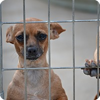 Adopt A Pet :: Madrid - Pikeville, MD
