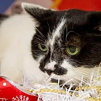 Adopt A Pet :: Smudge - Herndon, VA