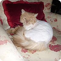 Adopt A Pet :: Solomon - stratford, ON