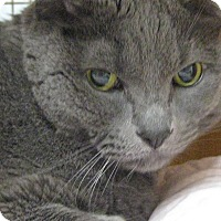 Adopt A Pet :: DECLAWED COLE THE CAT - Brea, CA