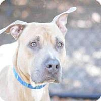 Adopt A Pet :: JAVIER - Fort Lauderdale, FL