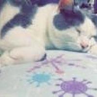 Adopt A Pet :: America - Duluth, GA