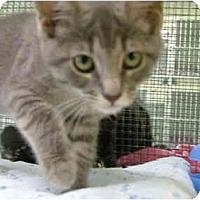 Adopt A Pet :: Fifi - Winter Haven, FL