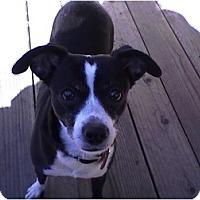 Adopt A Pet :: Beauty - Rancho Cordova, CA