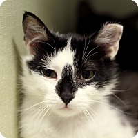 Adopt A Pet :: Guero - Chicago, IL