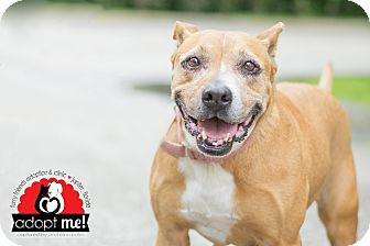 Hound (Unknown Type) Mix Dog for adoption in Jupiter, Florida - Parker