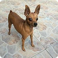 Adopt A Pet :: JENA (DA DG) - Tampa, FL
