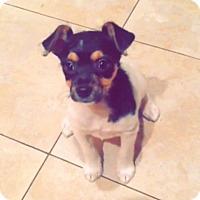 Adopt A Pet :: Amy - Foster, RI