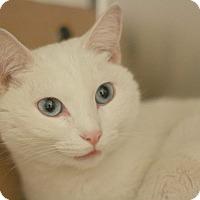 Adopt A Pet :: Elsa - Canoga Park, CA