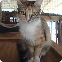 Adopt A Pet :: Fiona - Ravenel, SC