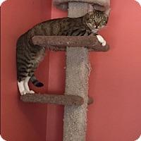 Adopt A Pet :: Donatello - Smyrna, GA