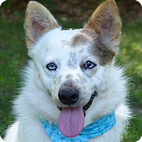 Adopt A Pet :: Jesse - Mocksville, NC