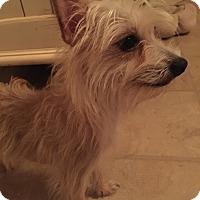Adopt A Pet :: Frankie - Leesburg, FL