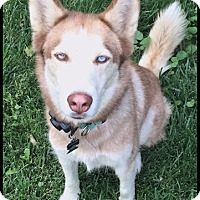 Adopt A Pet :: Keera- Adopted - Monument, CO
