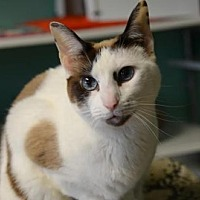 Adopt A Pet :: Kimi 7804 - Atlanta, GA