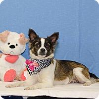 Adopt A Pet :: PRISCILLA - Poteau, OK