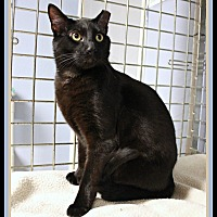 Adopt A Pet :: Antonio - New Richmond,, WI