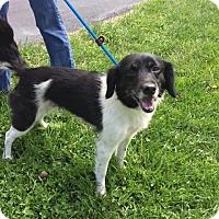 Adopt A Pet :: Patches - Batavia, OH