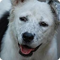 Adopt A Pet :: Luna - in Maine! - kennebunkport, ME