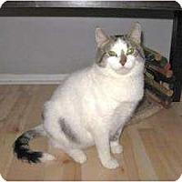 Adopt A Pet :: Lydia - Milwaukee, WI