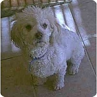 Adopt A Pet :: Sadie - dewey, AZ