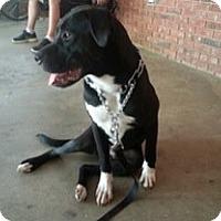 Adopt A Pet :: Jameson - Greenville, SC