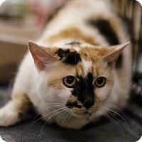 Adopt A Pet :: Bridgett - Sacramento, CA