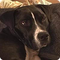 Adopt A Pet :: Charlie - adoption pending - Regina, SK