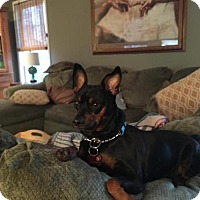 Adopt A Pet :: Snoop - Oakhurst, NJ