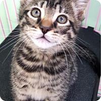 Adopt A Pet :: Felix - Key Largo, FL
