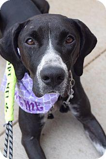 Bluetick Coonhound/Pointer Mix Dog for adoption in Aubrey, Texas - Daisy