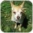 Photo 3 - Chihuahua Dog for adoption in Milwaukee, Wisconsin - Brownie