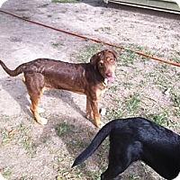 Adopt A Pet :: Reece - Baton Rouge, LA
