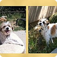 Adopt A Pet :: Scarlett - Scottsdale, AZ
