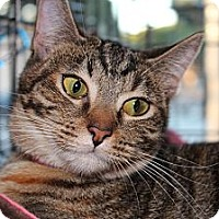 Adopt A Pet :: Molly - Santa Monica, CA