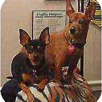 Adopt A Pet :: Rebel - Nashville, TN
